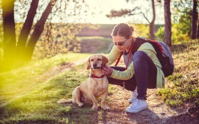 First-Time Dog Owner: 7 Tips on How to Take Care of a Dog