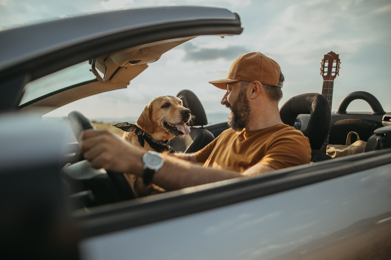 TIPS FOR TAKING A ROAD TRIP WITH YOUR DOGS