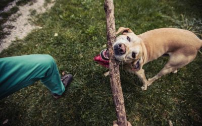 Why Dogs Love Sticks