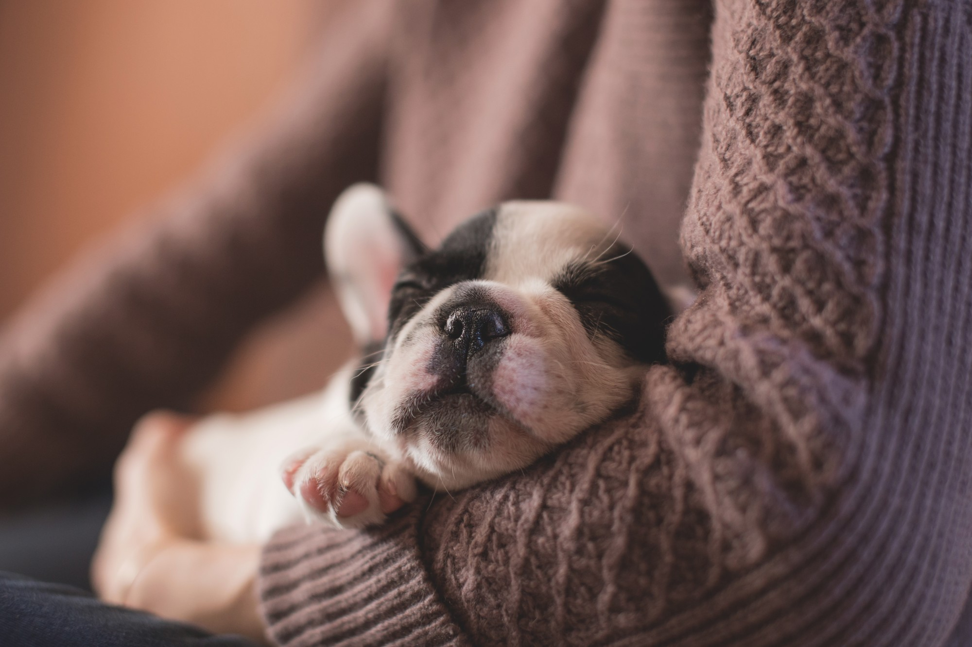 8 Puppy Training Tips for Nurturing a Lovely and Obedient Pet