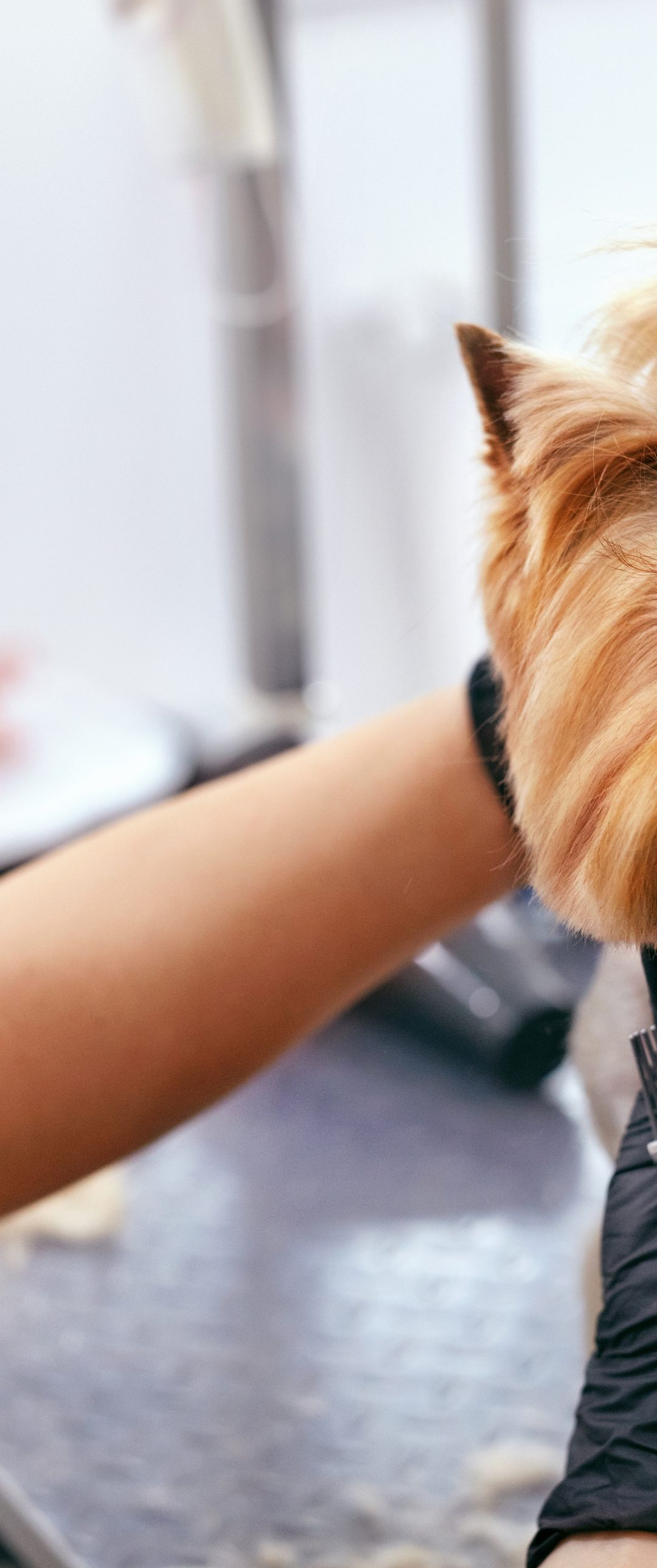 5 Dog Grooming Essentials You Need As A Dog Owner