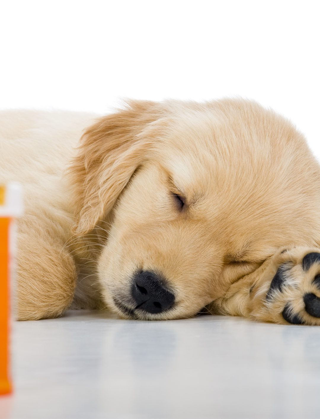 Are Supplements Good For Dogs?
