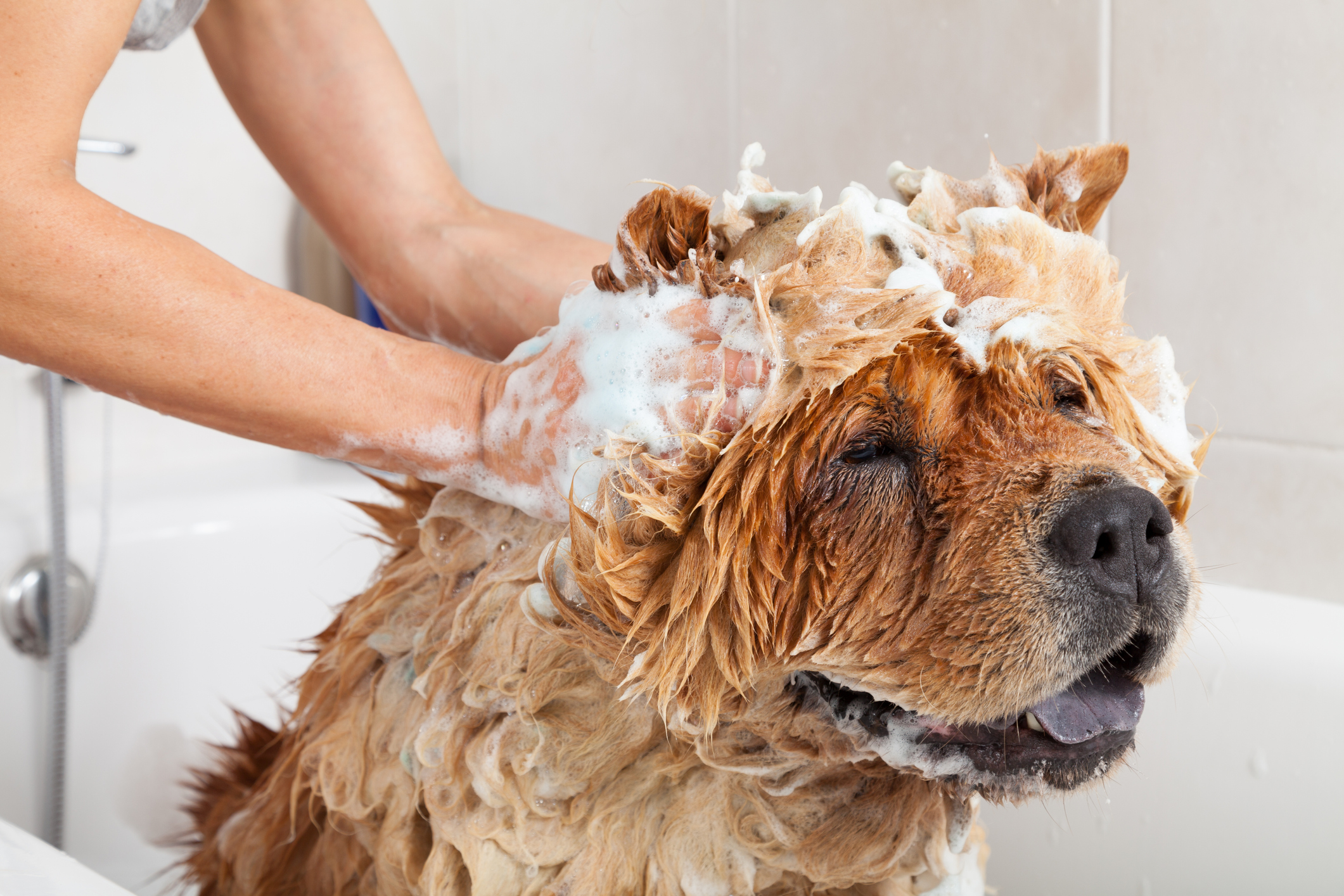 How To Get Rid Of Wet Dog Smell