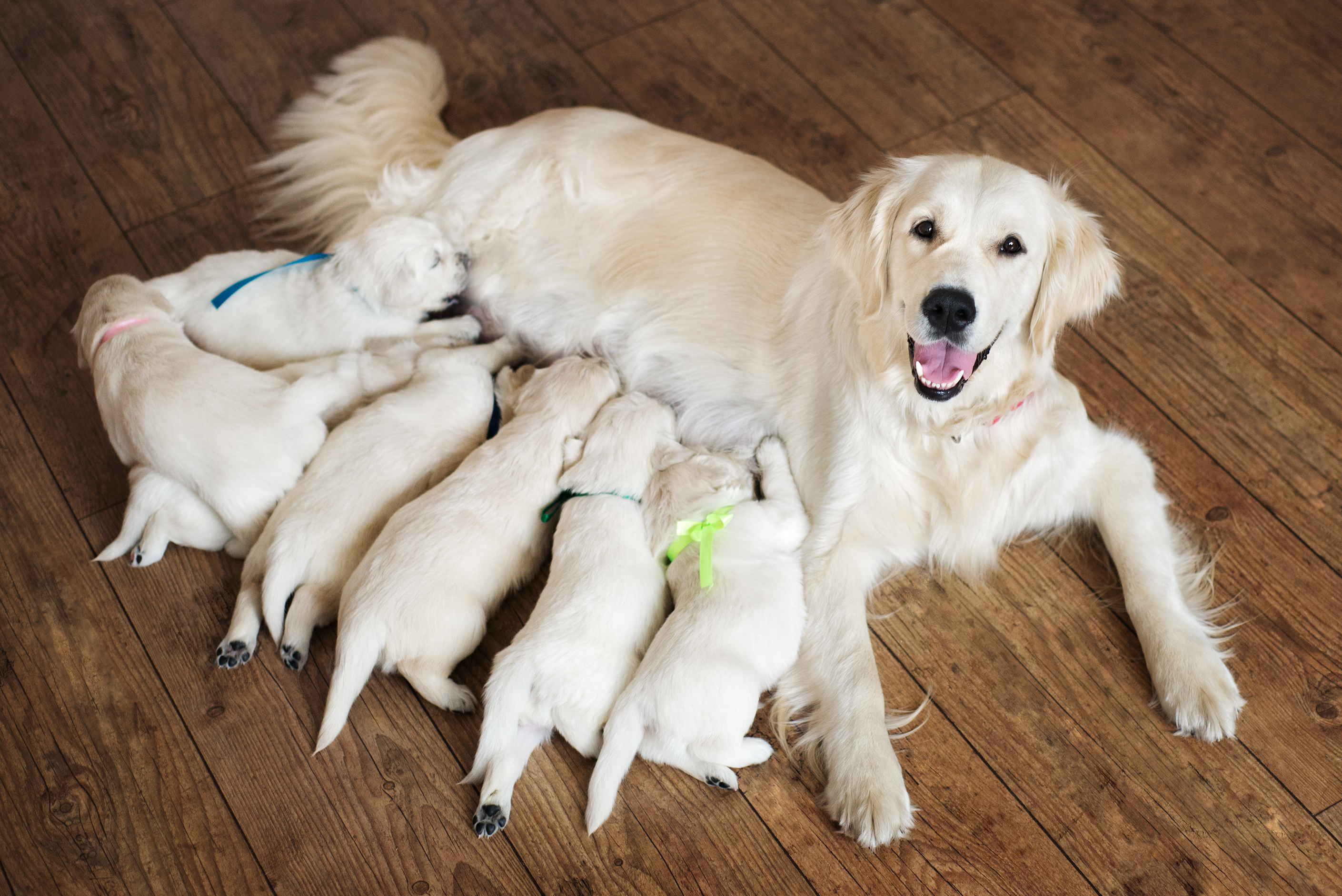 How to Choose a Dog Breeder When Looking For a Puppy