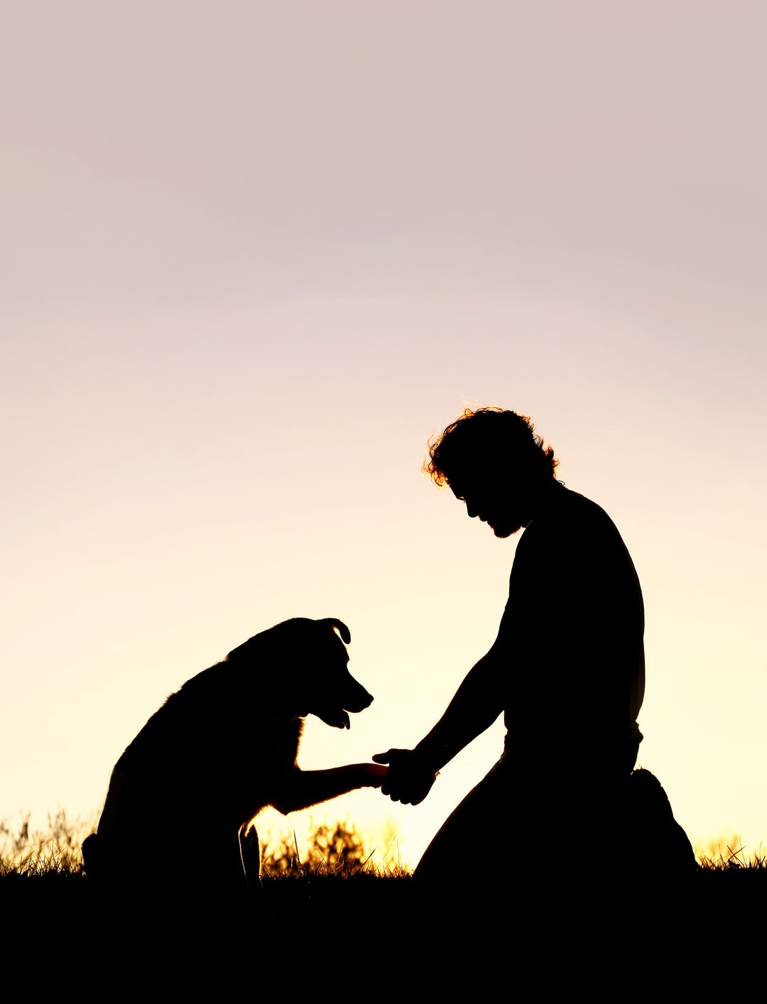 Common Mistakes Dog Owners Make When Training Their Dogs