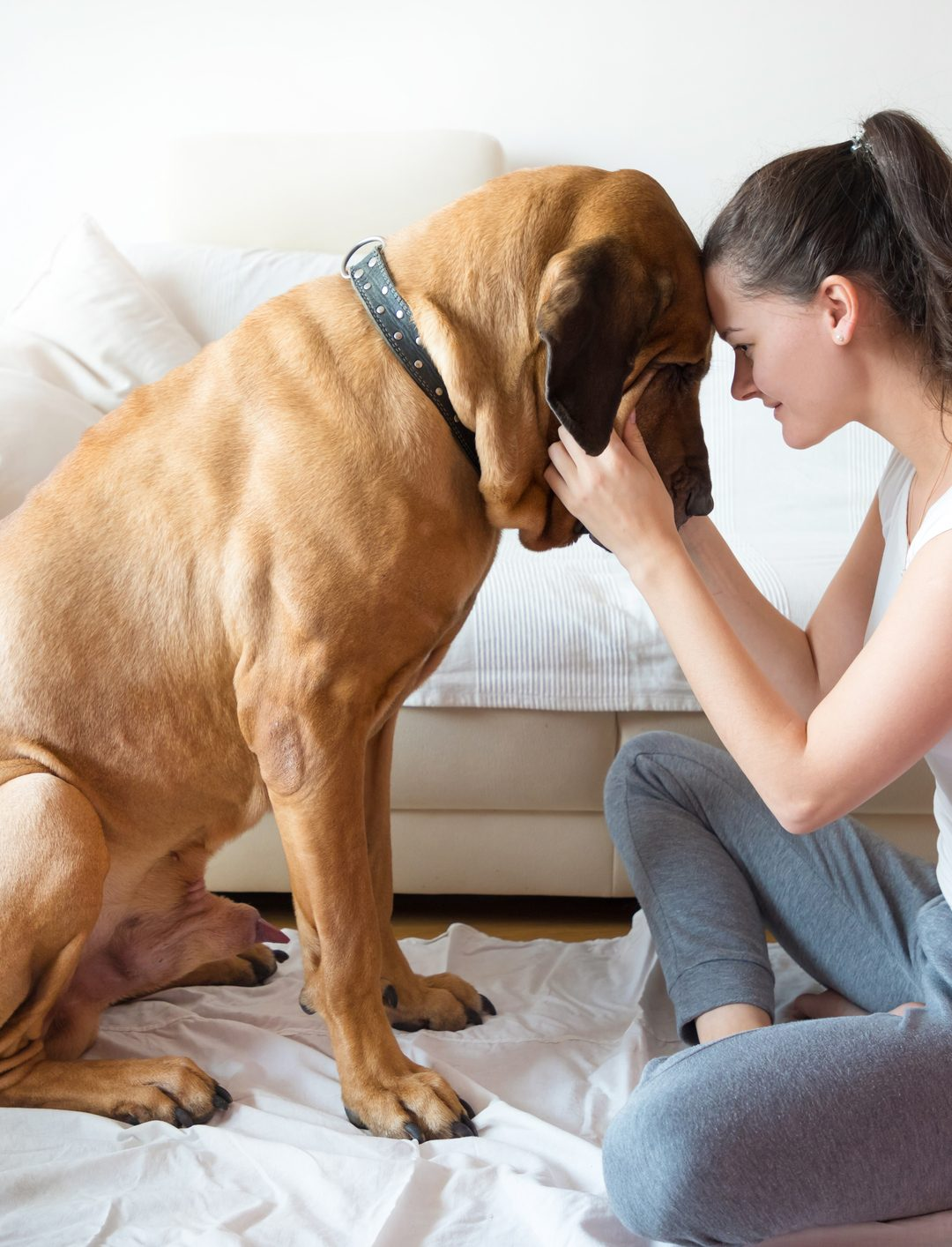 Benefit of Emotional Support Dogs