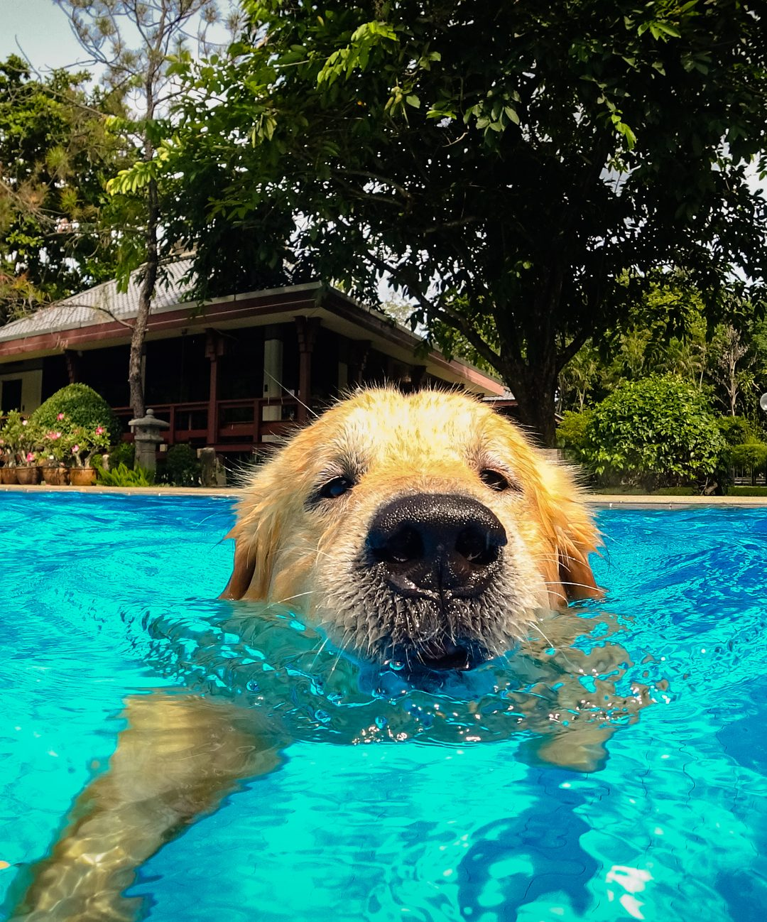 Dog Hydrotherapy And Its Effectiveness In Rehabilitation