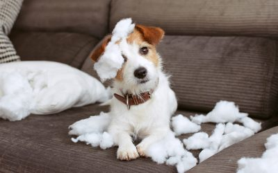 5 Ways to Help Dogs With Separation Anxiety