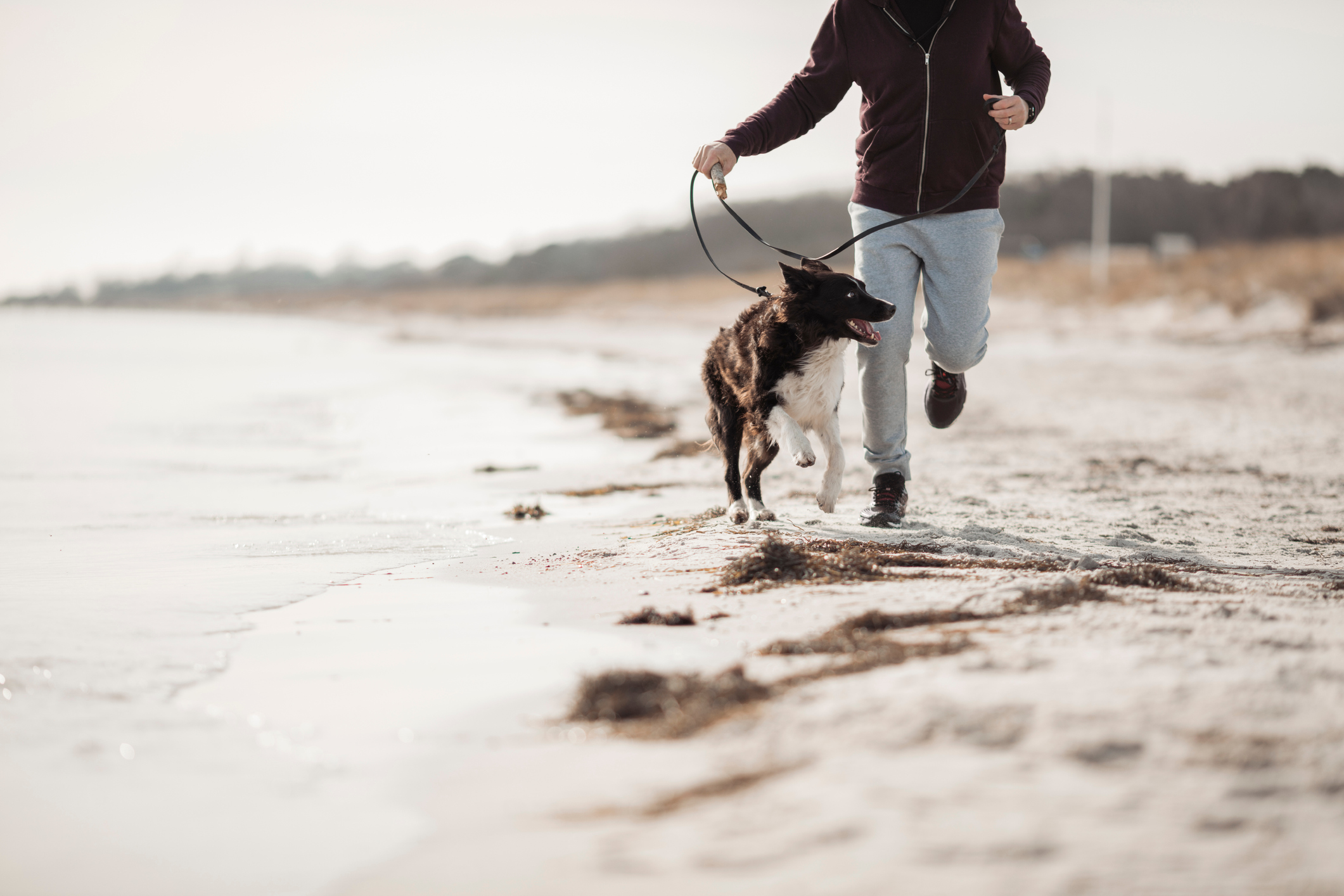 The Importance Of Exercise For Your Dogs