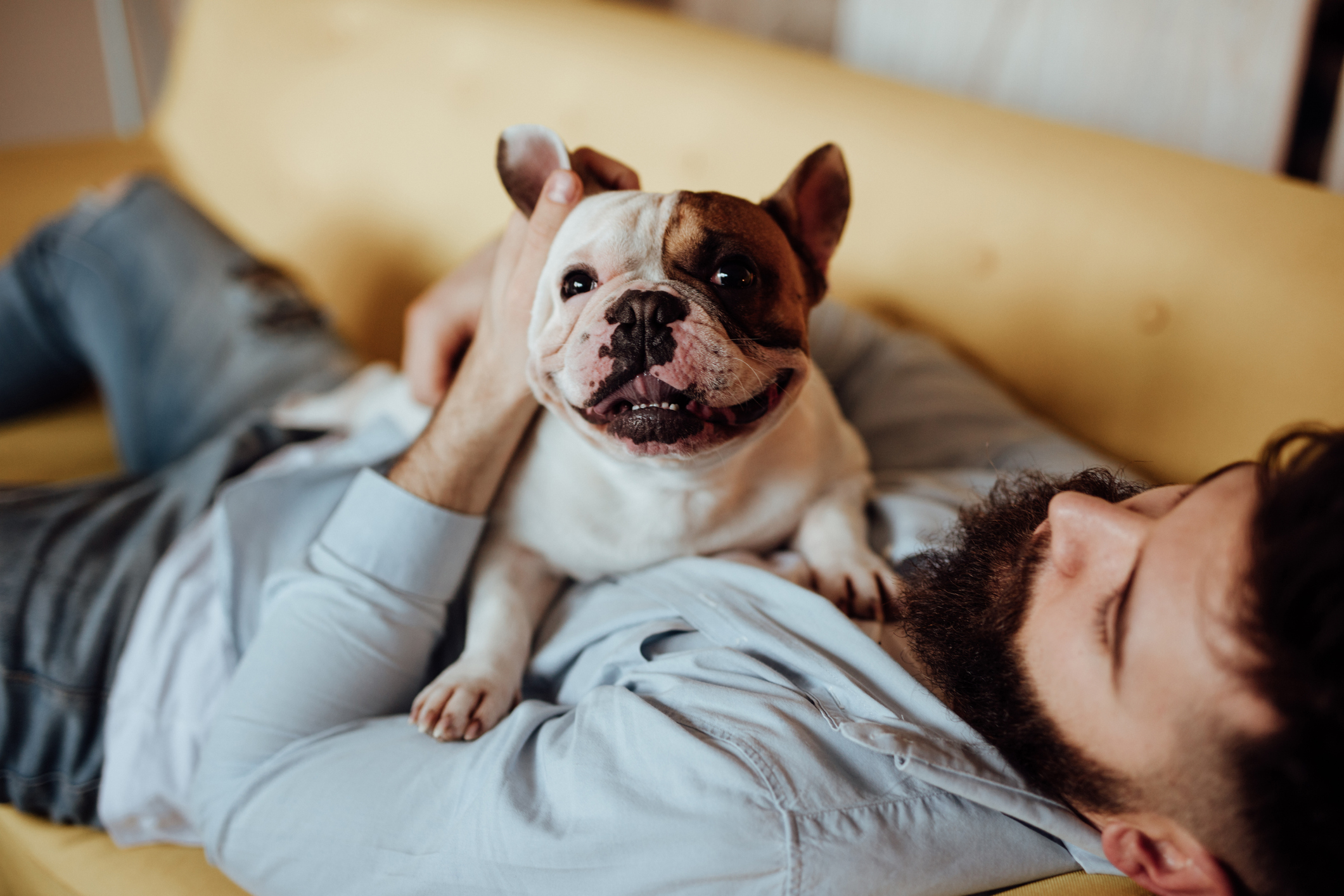 Benefits Of Superfood Powders And Oil Sprays For Dogs