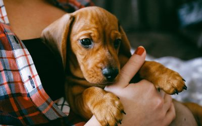 Biggest Mistakes New Puppy Owners Can Make