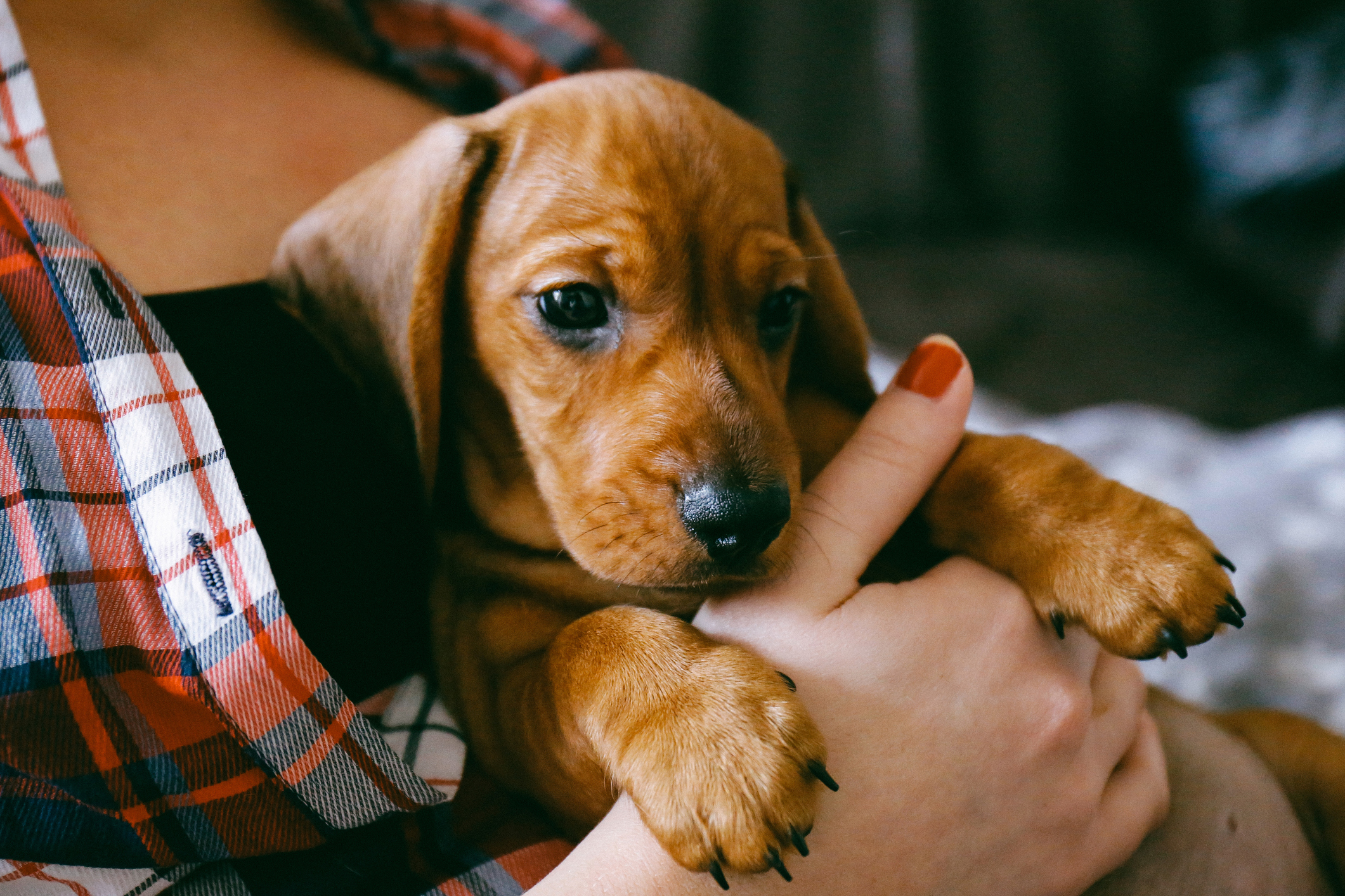 Biggest Mistakes New Puppy Owners Make