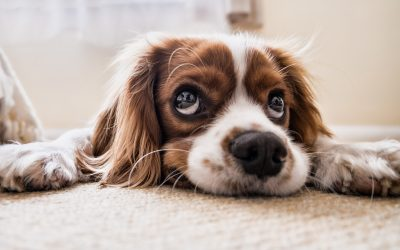 How Dogs Help With Depression and Other Mental Illnesses