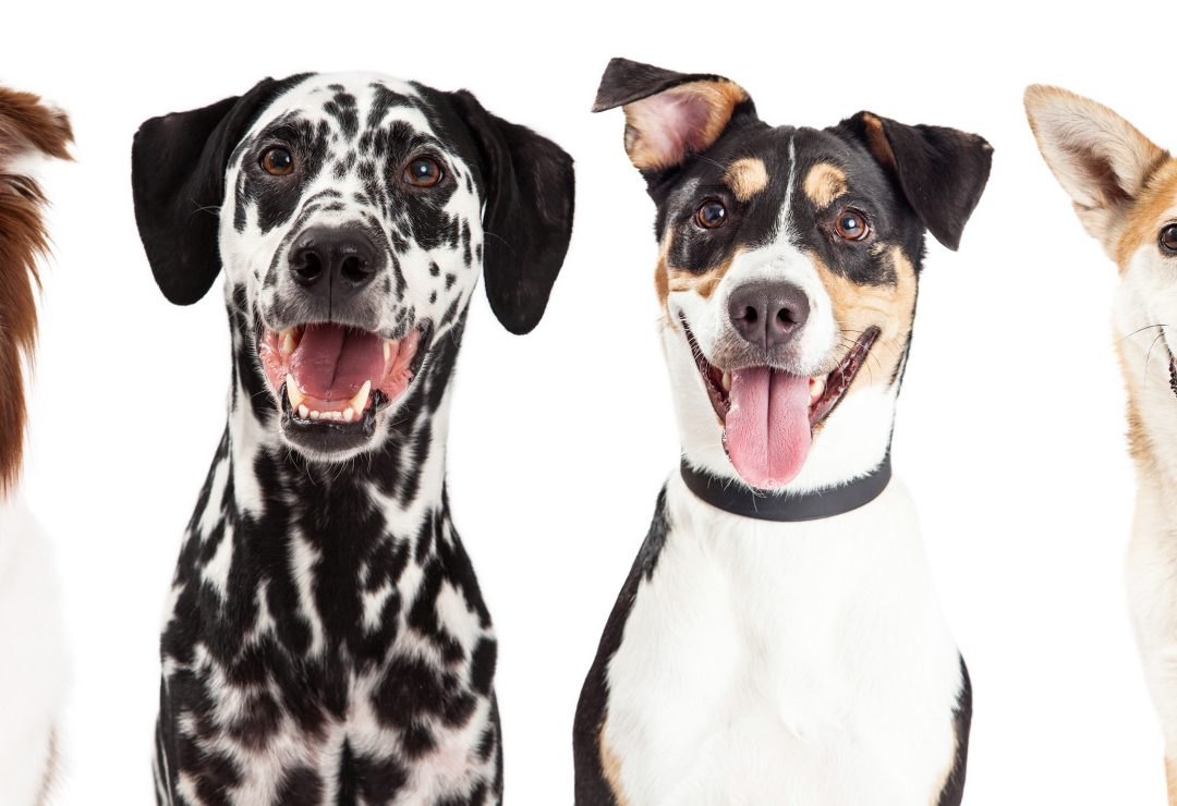 Going Meat-Free: Can Dogs Be Vegetarian?