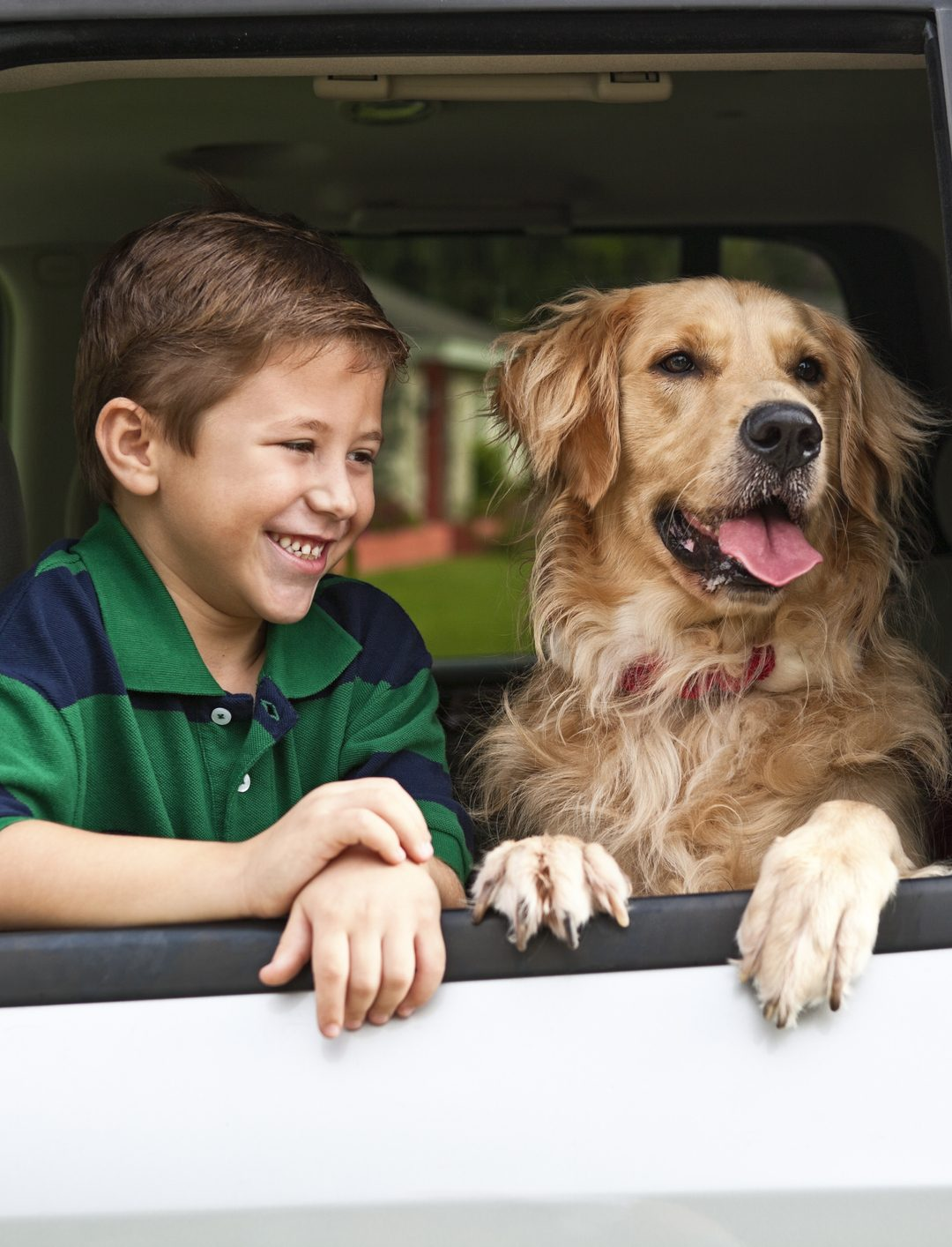 The Best Tips for Introducing a Dog to Your Children and Family
