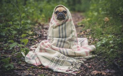 Lyme Disease in Dogs: A Guide With Everything You Should Know