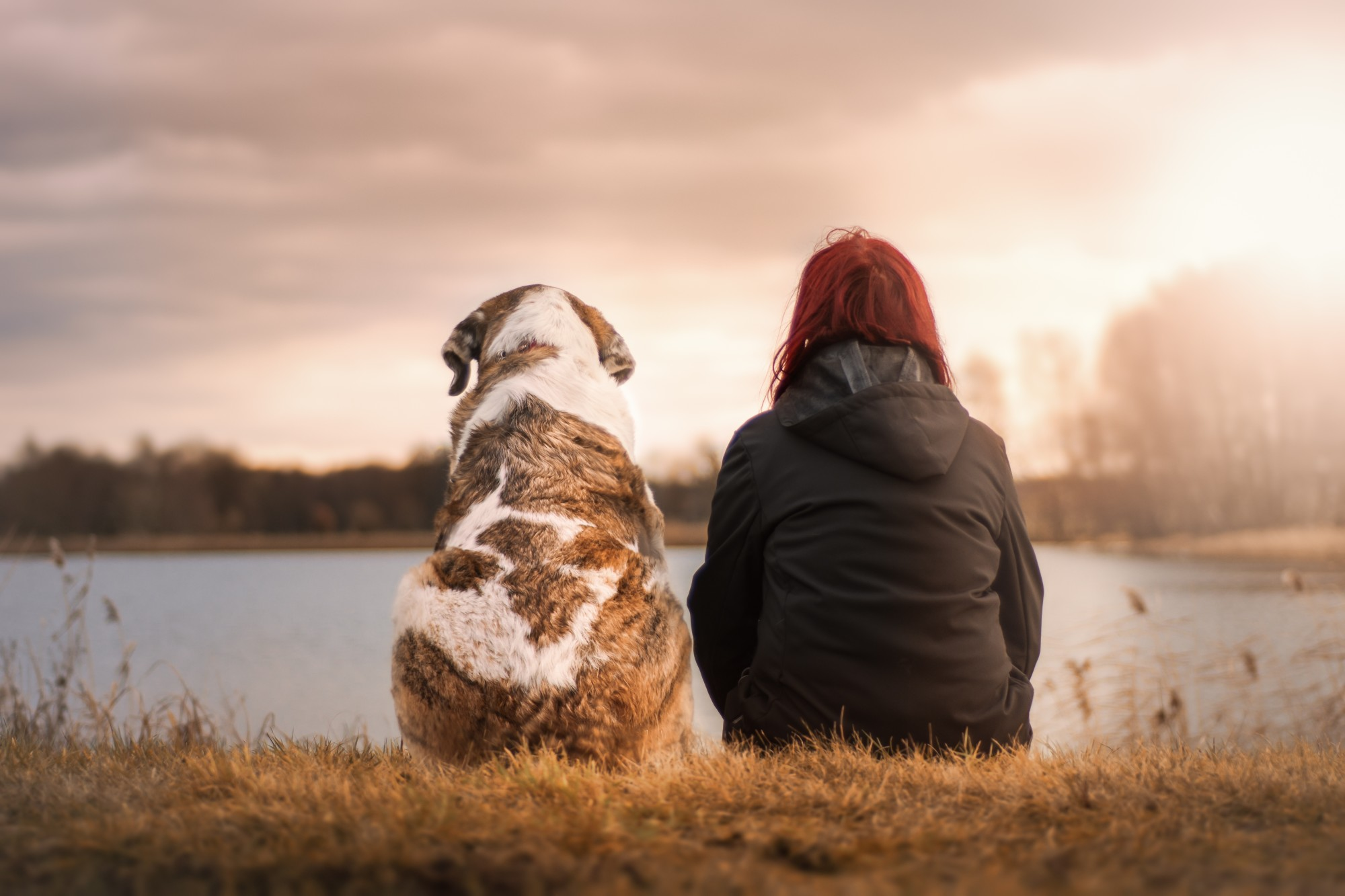Understanding the Canine Human Bond: BFF's For Life!