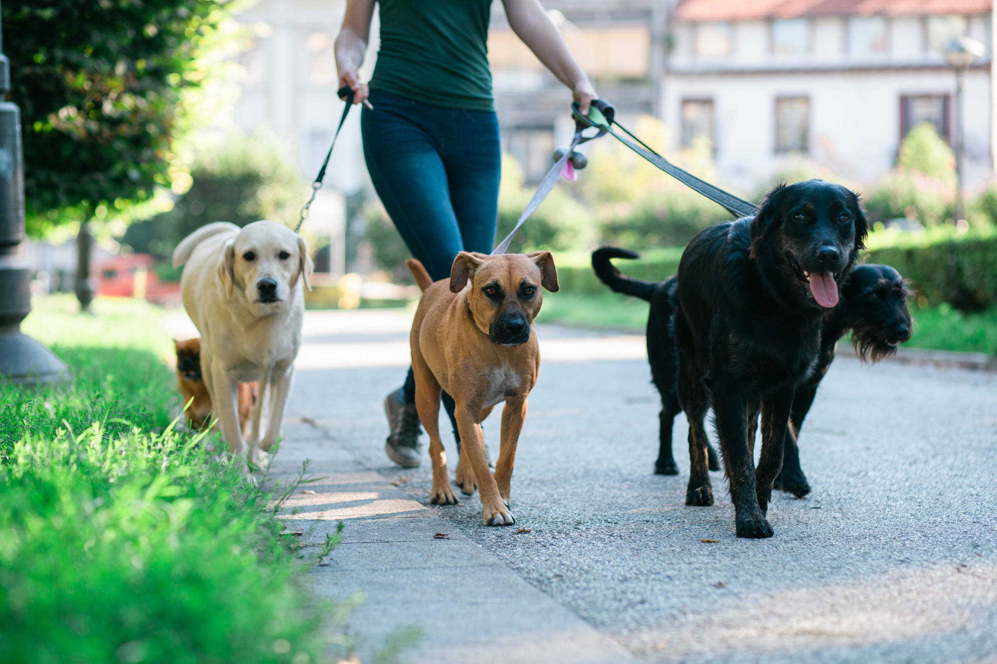 Playing With Your Dog: 9 Fun Things to Do With Your Four Legged Friends