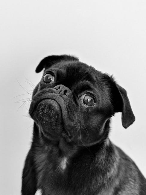 Should I Get a Dog? 8 Questions to Ask Yourself Before You Bring Home a Pup