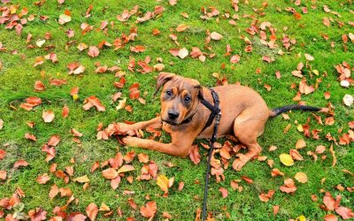 How to Leash Train a Dog: 6 Tips You Need to Know