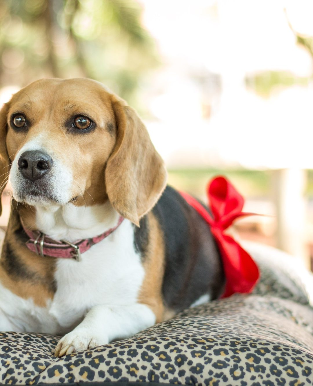 Everything You Need to Know About a Dog's Reproductive Health