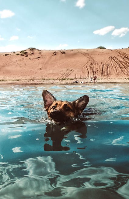 How to Teach a Dog to Swim: The Only Guide You Need