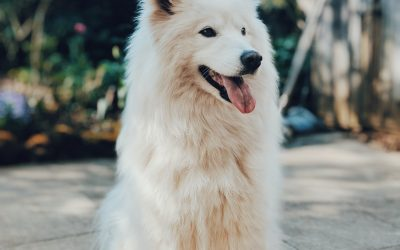 Happy Canines: 7 Signs Your Dogs Are Living Their Best Life