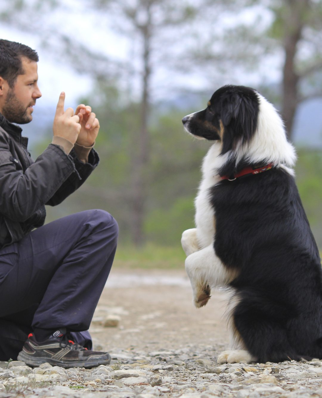 5 Impressive Dog Tricks Any Pooch Can Learn
