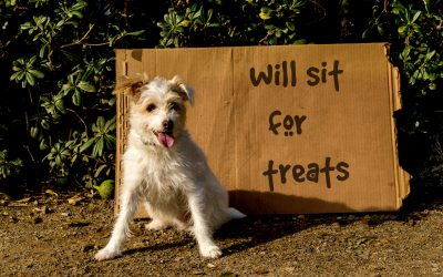 15 Surprisingly Healthy Treats for Dogs That You Love Too!