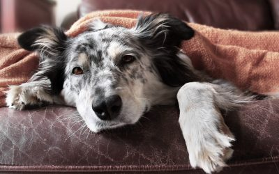 Unleashing the Facts: How Much Exercise Does a Dog Need Everyday?