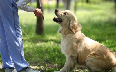 6 Basic Dog Commands to Start Teaching Your Puppy