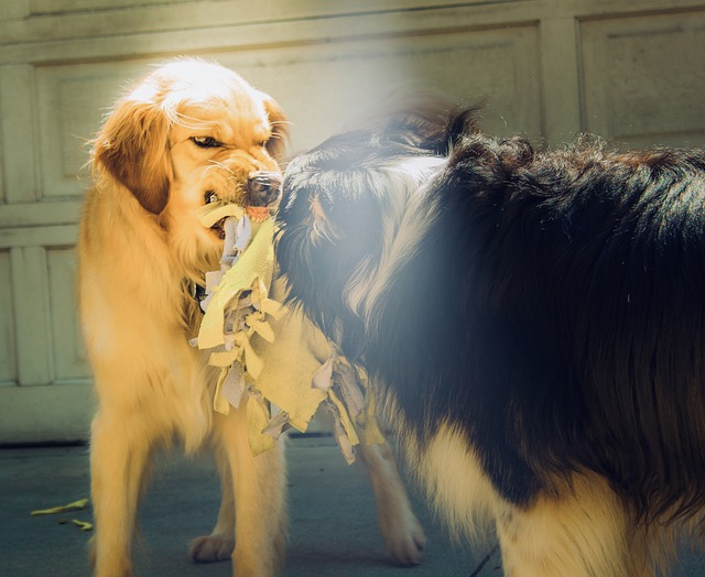 Dog Aggression: How to Stop Aggressive Behavior in Its Tracks