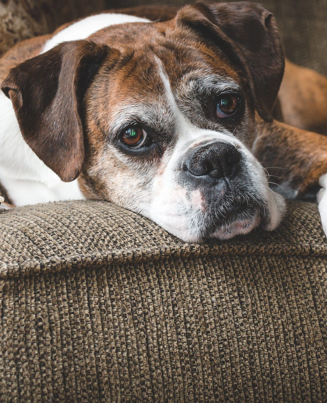 What to Do When Your Dog Has a Seizure: The Complete Guide