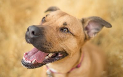 How to Calm Down a Dog: 5 Effective Tips