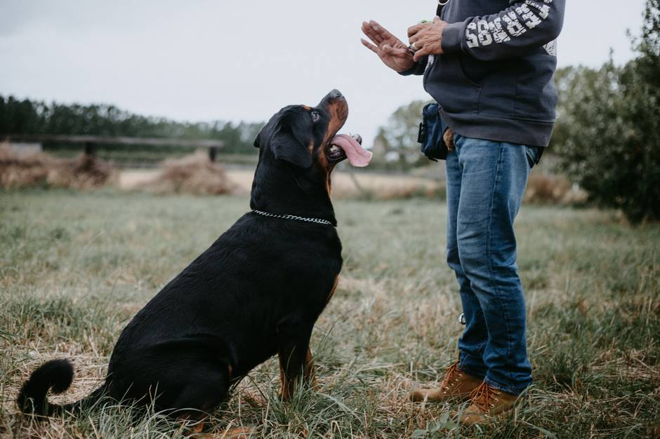 Guard Dog Training Guide: How to Correctly Train a Guard Dog