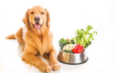 Dog Nutrition Guide: 7 Tips for Feeding Your Dog a Healthy Diet